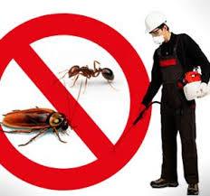 مكافحة حشرات بالدمام