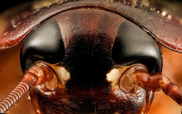 شركة مكافحة الحشرات بالمملكة السعودية