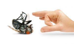 شركة مكافحة حشرات ورش مبيدات بالرياض