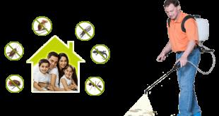 شركة مكافحة حشرات بالظهران