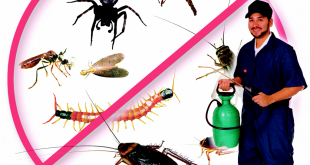 شركة مكافحة حشرات بالقطيف